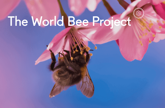 WBP Logo @WorldBeeProject.org