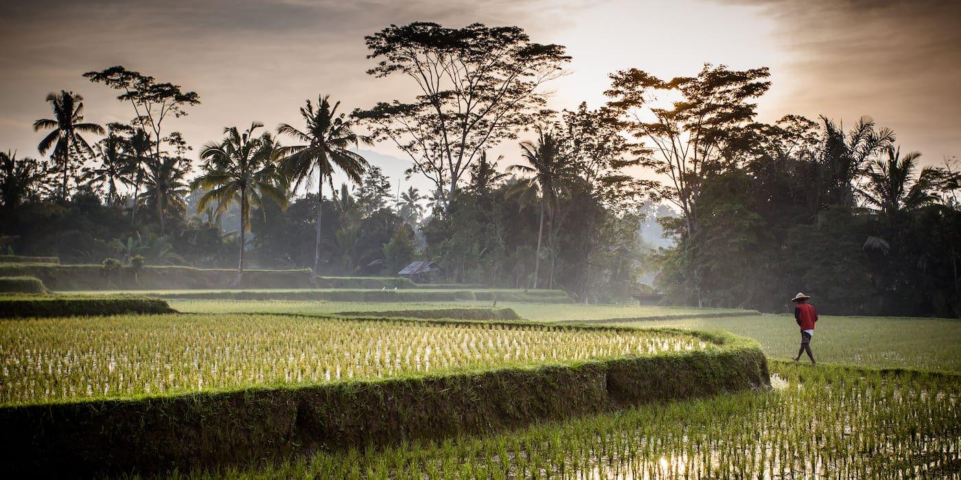 Ant Financial und Bayer Coop Science planen Blockchain für den Agrarmarkt